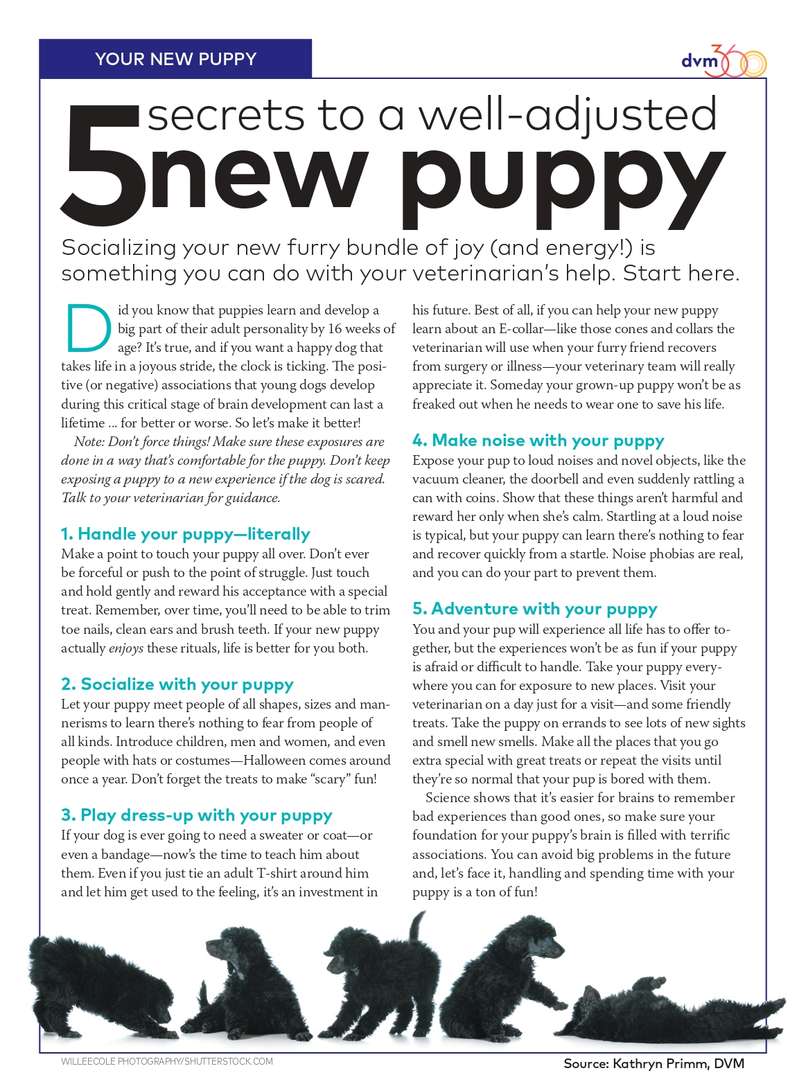 5 Secrets to a well-adjusted new puppy